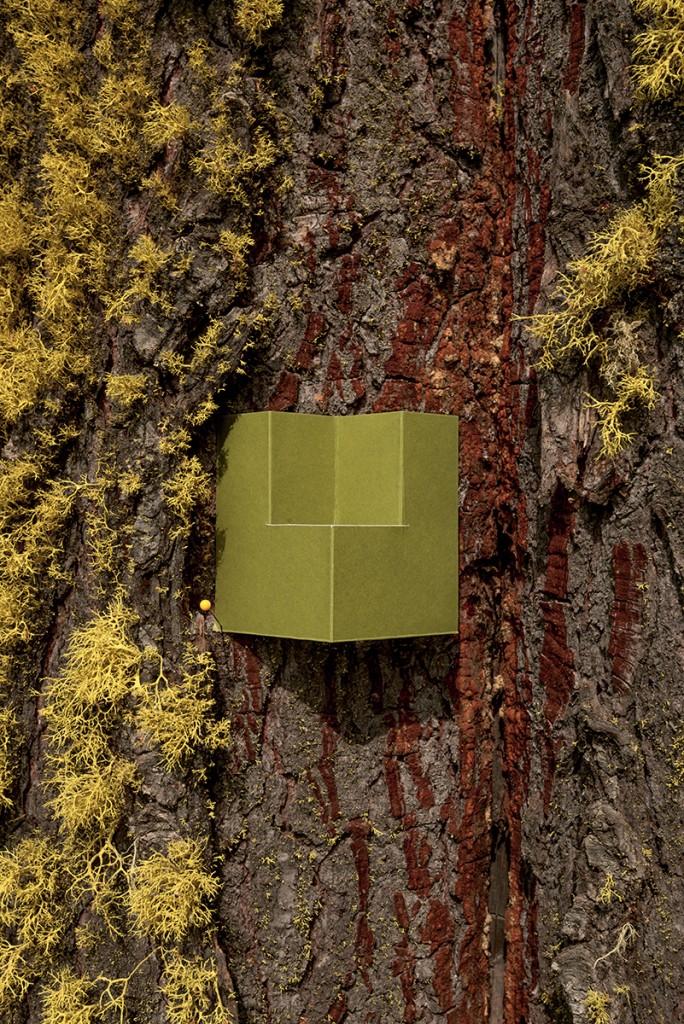 box_tree